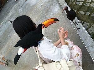 鳥を乗せて鳥に給餌する人