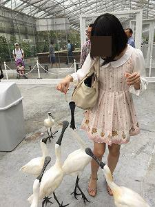 ワカサギにむらがる鳥