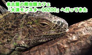 名古屋市の爬虫類カフェ「大須モンスターOOZOO」へ行ってきた