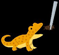 餌を食べる爬虫類のイメージ