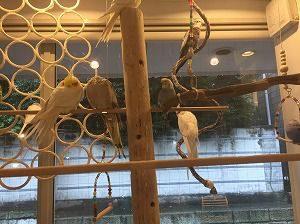 小鳥カフェ心斎橋店の店内