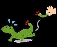 懐かない爬虫類のイメージ