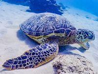 ウミガメのイメージ画像