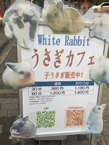 white rabbitの看板