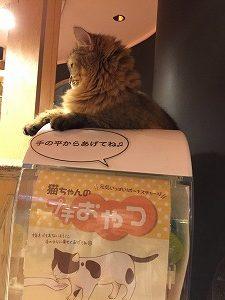 おやつガチャに反応する猫