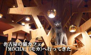 名古屋の猫カフェ「MOCHA」(モカ)へ行ってきた
