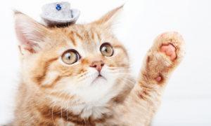 動物アレルギーの根本療法