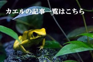 カエルの記事をもっと読む