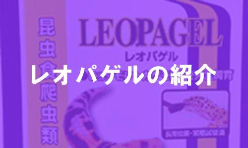 レオパゲルの紹介アイキャッチ画像