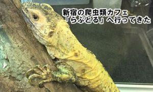 新宿の爬虫類カフェ「らぷとる」へ行ってきた