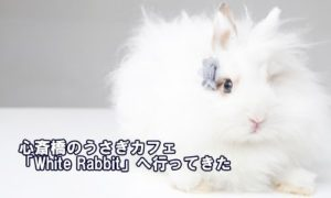 心斎橋のうさぎカフェ「White Rabbit」へ行ってきた
