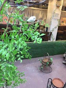 小鳥カフェの写真映えスポット
