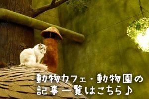 動物カフェ・動物園の記事をもっと読む