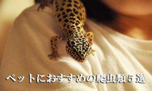 ペットにおすすめの爬虫類5選