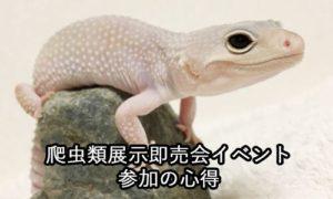 爬虫類展示即売会イベント 参加の心得