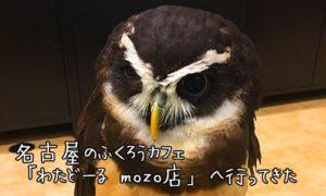 名古屋のふくろうカフェ「わたどーる mozo店」へ行ってきた